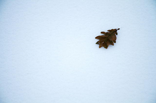 Snowy Zen #2